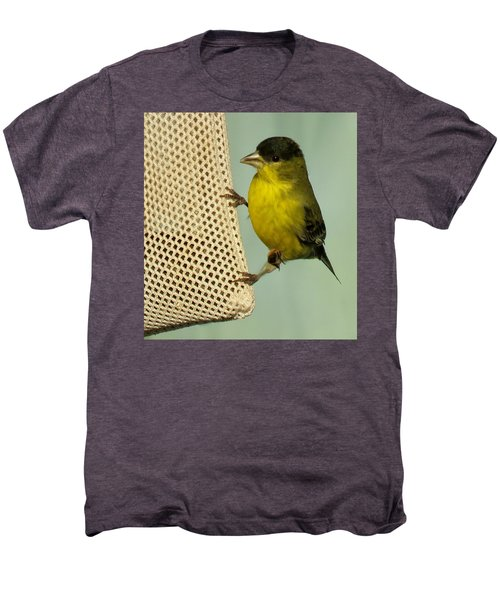 Male Goldfinch On Sock Feeder Men's Premium T-Shirt