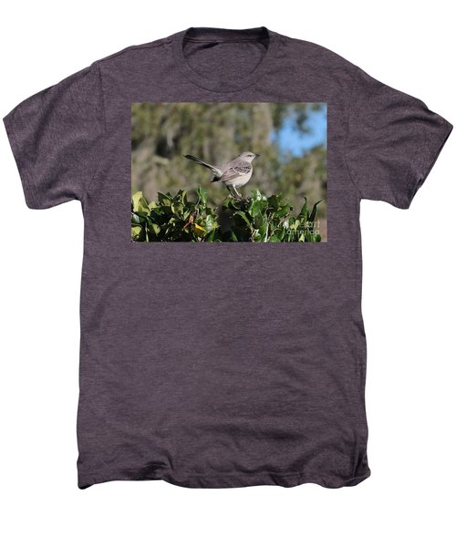 Northern Mockingbird Men's Premium T-Shirt by Carol Groenen