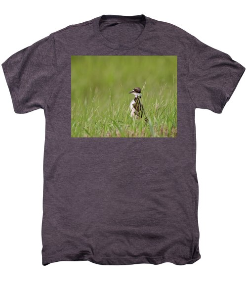 Young Killdeer In Grass Men's Premium T-Shirt by Mark Duffy
