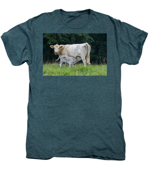 Charolais Cattle Nursing Young Men's Premium T-Shirt
