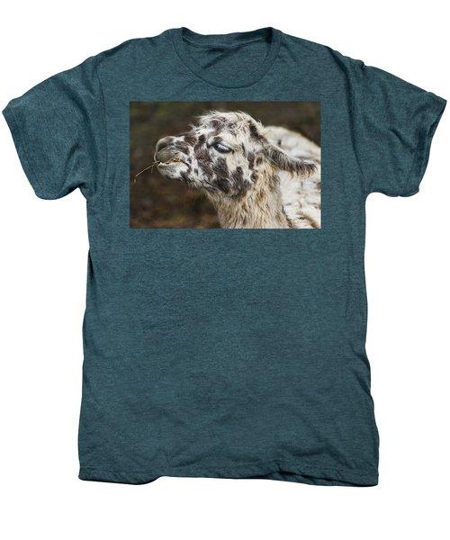Lady Llama Men's Premium T-Shirt