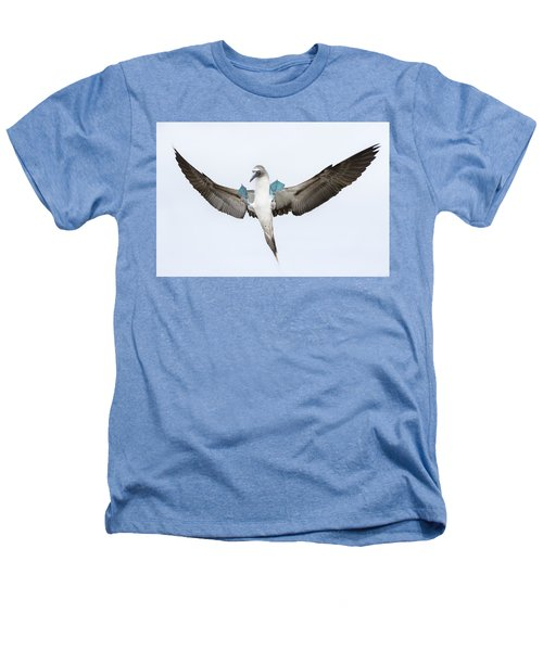 Blue-footed Booby Landing Galapagos Heathers T-Shirt by Tui De Roy