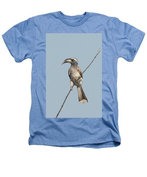 African Grey Hornbill Tockus Nasutus Heathers T-Shirt by Panoramic Images