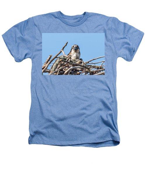 Osprey Eyes Heathers T-Shirt by Paul Freidlund