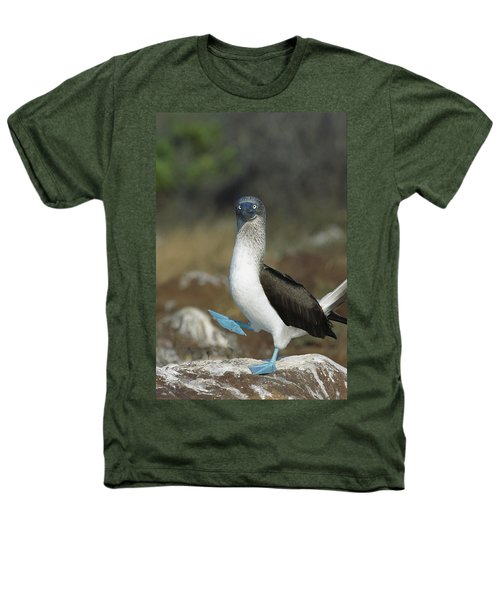 Blue-footed Booby Courtship Dance Heathers T-Shirt by Tui De Roy