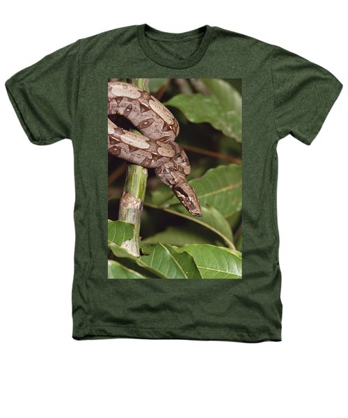 Boa Constrictor Coiled South America Heathers T-Shirt