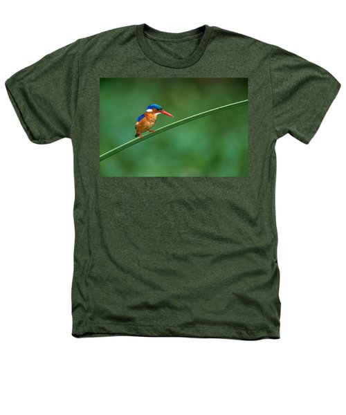 Malachite Kingfisher Tanzania Africa Heathers T-Shirt by Panoramic Images