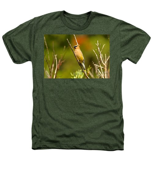 Fishercap Cedar Waxwing Heathers T-Shirt by Adam Jewell