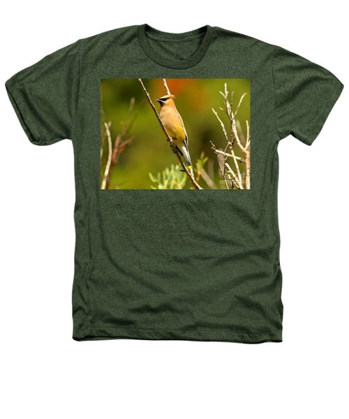 Glacier Cedar Waxwing Heathers T-Shirt by Adam Jewell