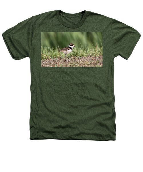 Killdeer - 24 Hours Old Heathers T-Shirt by Travis Truelove