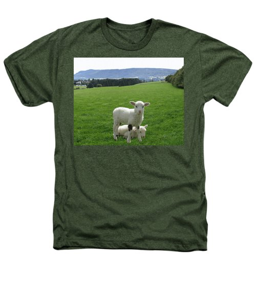 Lambs In Pasture Heathers T-Shirt by Dominic Yannarella