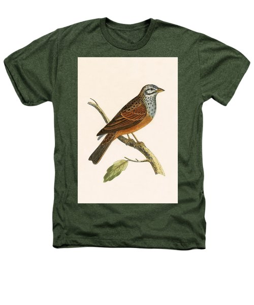 Striolated Bunting Heathers T-Shirt by English School