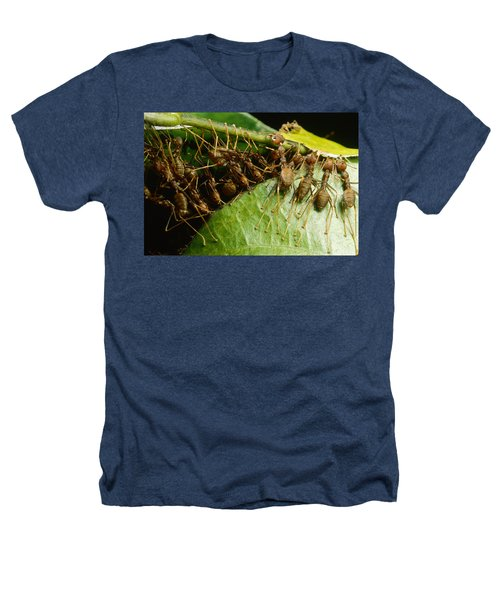 Weaver Ant Group Binding Leaves Heathers T-Shirt by Mark Moffett