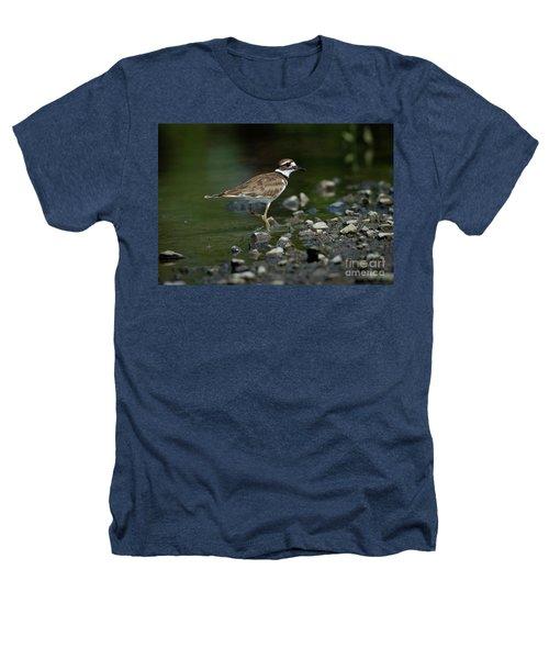 Killdeer  Heathers T-Shirt by Douglas Stucky