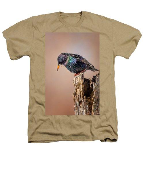 Backyard Birds European Starling Heathers T-Shirt by Bill Wakeley