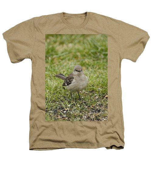 Northern Mockingbird Heathers T-Shirt by Heather Applegate
