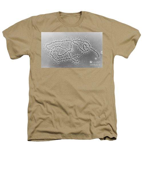 Lampbrush Chromosomes Newt, Lm Heathers T-Shirt