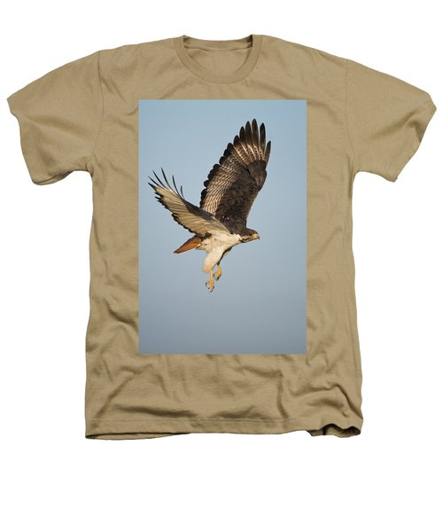 Augur Buzzard Buteo Augur Flying Heathers T-Shirt by Panoramic Images