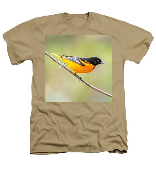 Baltimore Oriole Heathers T-Shirt by Paul Freidlund