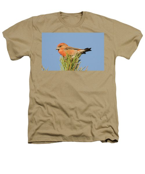 Crossbill Heathers T-Shirt by Judd Nathan