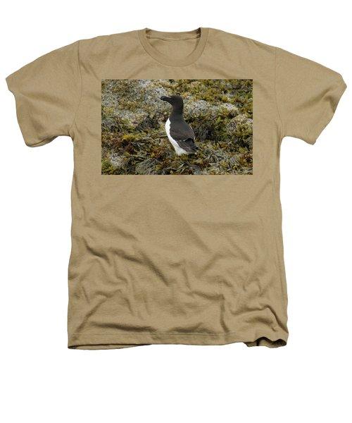 Razorbill Heathers T-Shirt by Judd Nathan