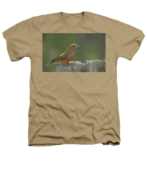 Red Crossbill Heathers T-Shirt by Constance Puttkemery