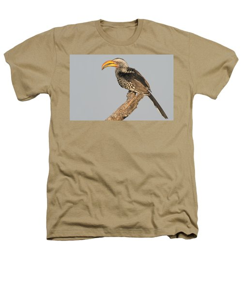 Southern Yellow-billed Hornbill Tockus Heathers T-Shirt by Panoramic Images