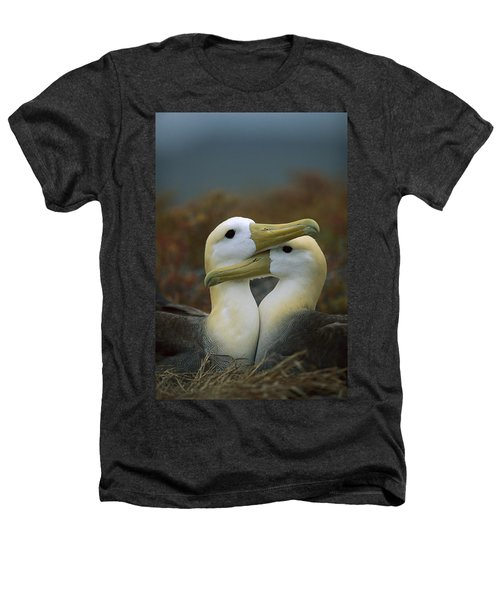 Waved Albatross Pair Bonding Galapagos Heathers T-Shirt by Tui De Roy