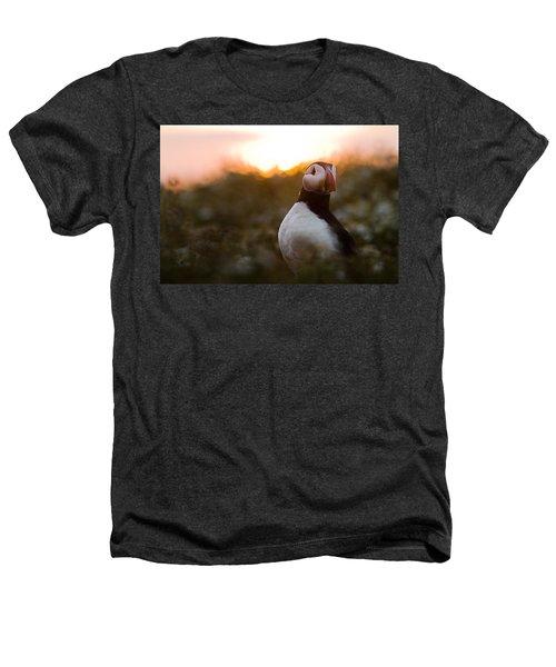 Atlantic Puffin At Sunrise Skomer Heathers T-Shirt by Sebastian Kennerknecht