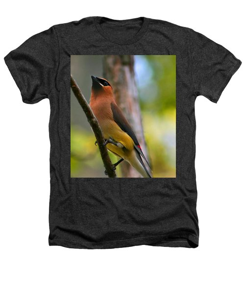 Cedar Wax Wing Heathers T-Shirt by Roger Becker