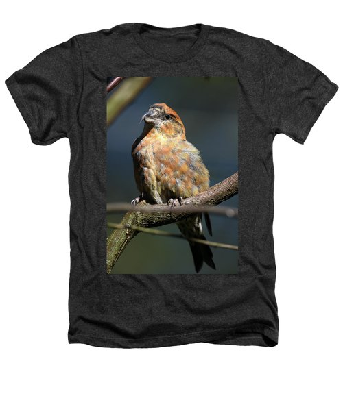 Crossbill Loxia Curvirostra Male Spain Heathers T-Shirt