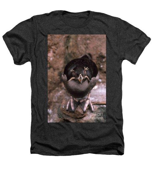 Rhinoceros Auklet Heathers T-Shirt