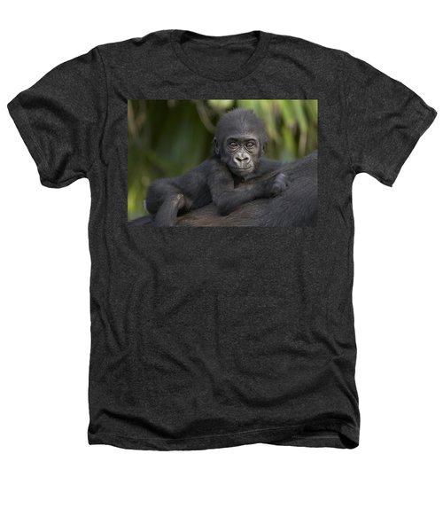 Western Lowland Gorilla Gorilla Gorilla Heathers T-Shirt by San Diego Zoo