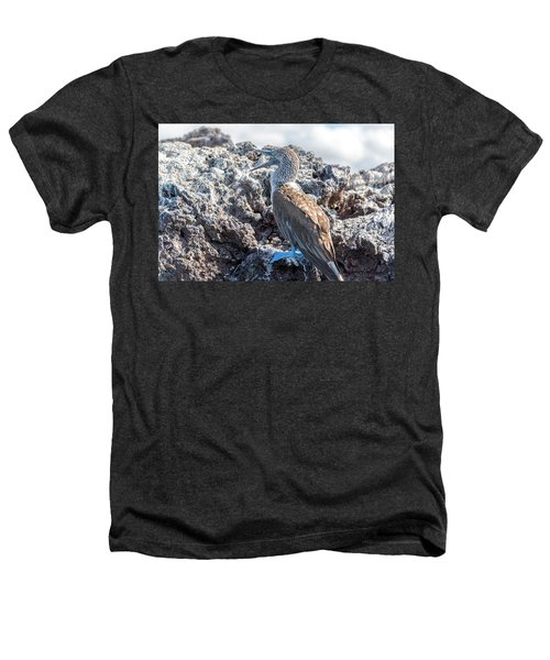 Blue Footed Booby Heathers T-Shirt by Jess Kraft