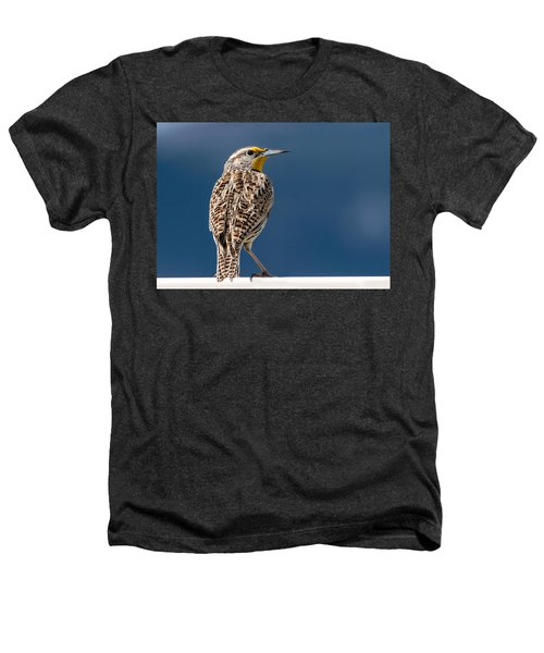 Western Meadowlark Heathers T-Shirt by Dawn Key
