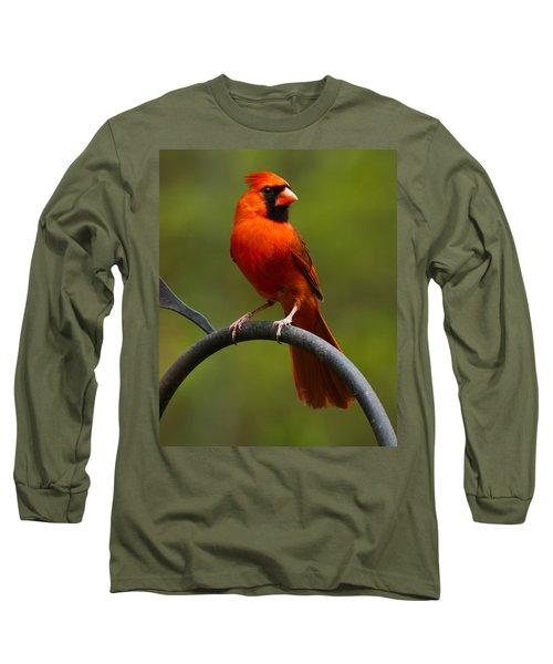 Male Cardinal Long Sleeve T-Shirt by Robert L Jackson