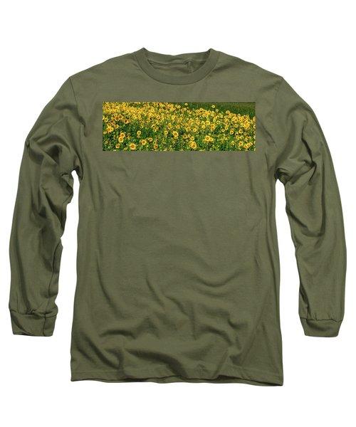 Sunflowers Helianthus Annuus Growing Long Sleeve T-Shirt