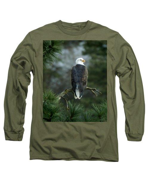 Bald Eagle In Tree Long Sleeve T-Shirt