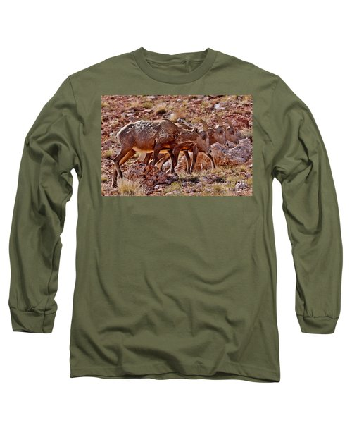 Long Sleeve T-Shirt featuring the photograph Bighorn Canyon Sheep Trio by Janice Rae Pariza