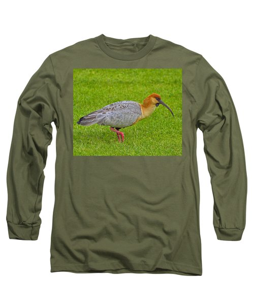Black-faced Ibis Long Sleeve T-Shirt by Tony Beck