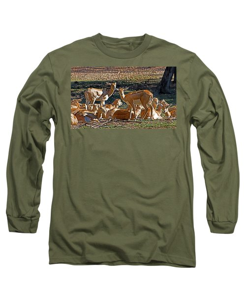Blackbuck Female And Fawns Long Sleeve T-Shirt