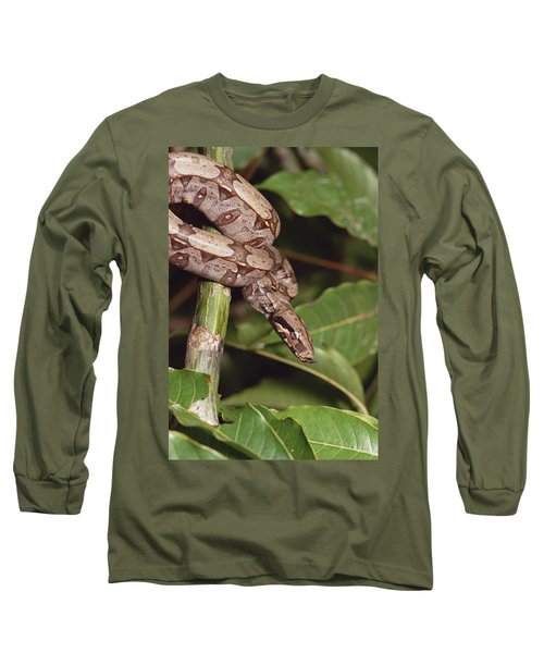 Boa Constrictor Coiled South America Long Sleeve T-Shirt by Gerry Ellis