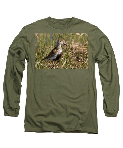 Dunlin Standing In Tall Sedge Grass On Long Sleeve T-Shirt