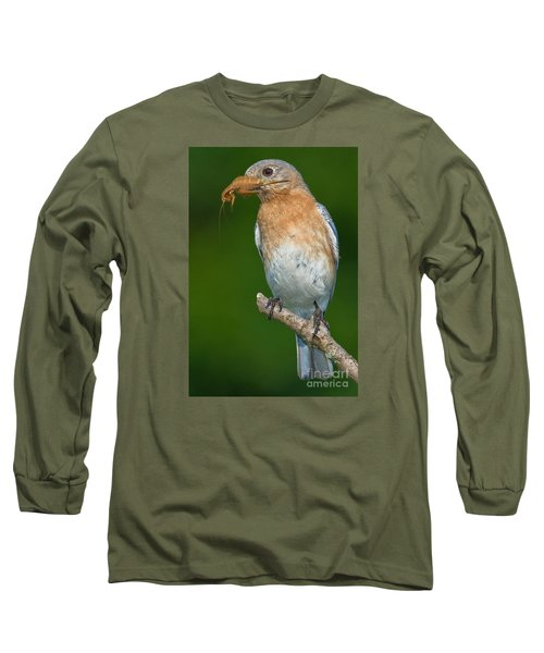 Eastern Bluebird With Katydid Long Sleeve T-Shirt by Jerry Fornarotto