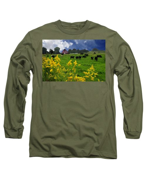 Golden Rod Black Angus Cattle  Long Sleeve T-Shirt