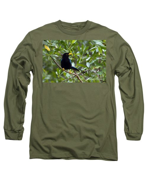 Immature Yucatan Jay Long Sleeve T-Shirt