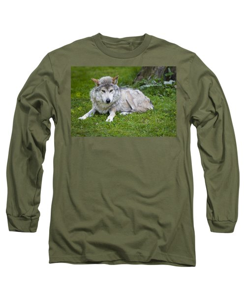 Long Sleeve T-Shirt featuring the photograph Mexican Gray Wolf by Sebastian Musial