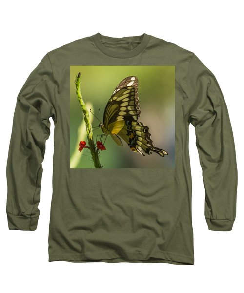 Long Sleeve T-Shirt featuring the photograph Palamedes Swallowtail by Jane Luxton