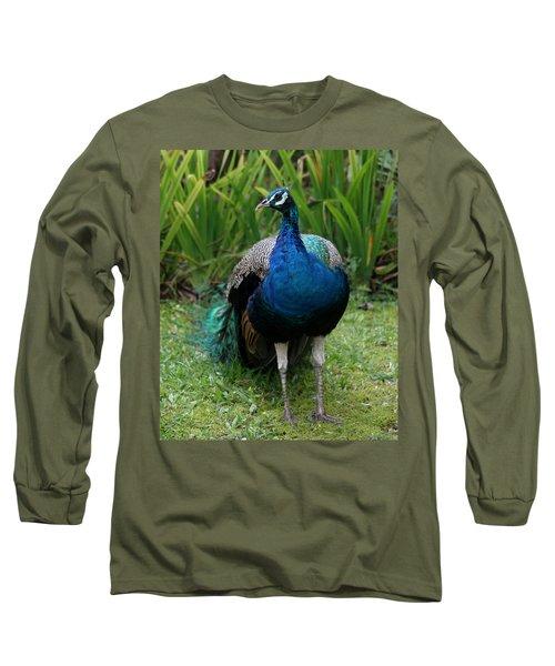 Peacock Long Sleeve T-Shirt by Pamela Walton