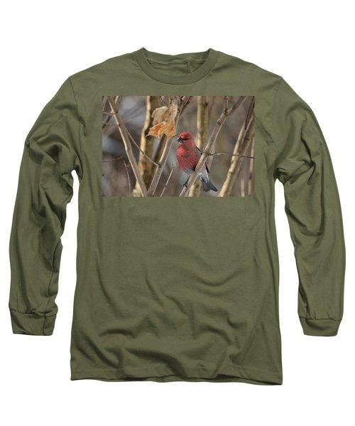 Long Sleeve T-Shirt featuring the photograph Pine Grosbeak by David Porteus